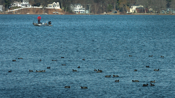 Amesbury: A fisherman casts his line in Lake Attitash in Amesbury on Monday near a flock of what appears to be American coots. Bryan Eaton/Staff Photo