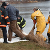 Amesbury: A deer which fell through the thin ice on Lake Gardner in Amesbury is put onto some blankets. Bryan Eaton/Staff Photo
