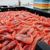 Seabrook: Native shrimp unloaded at Yankee Fisherman's Coop in Seabrook. Bryan Eaton/Staff Photo