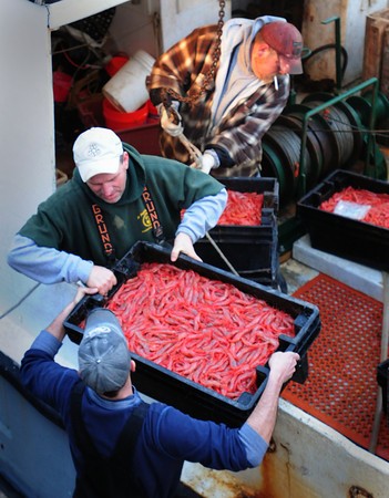 Seabrook: Captain Ed Eastman, center, of the Sweet Carolyn and his crew unload native shrimp at the Yankee Fisherman's Coop in Seabrook. Bryan Eaton/Staff Photo