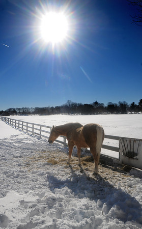 Newbury: Schooner, a horse at the Spencer-Pierce Little Farm,  grazes in the  snow and sunshine Thursday afternoon. JIm Vaiknoras/Staff photo