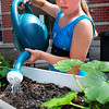 Salisbury: Amy Clark, 9, waters her summer squash plants at the Summer Program at Salisbury Elementary School yesterday morning, The children have planted crops in containers and in addition to caring for them, will be measuring and checking their growth throughout the summer. Bryan Eaton/Staff Photo