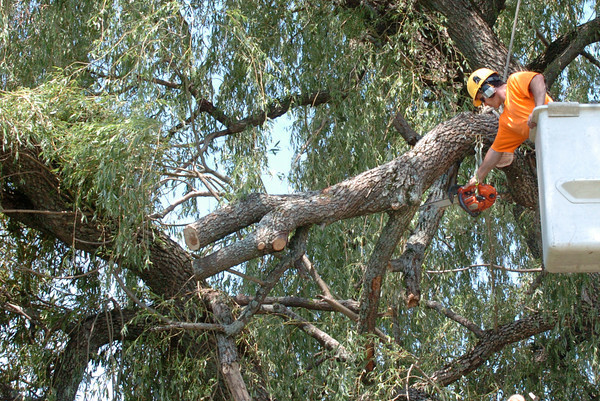Newbury: A work crew from Steve's Tree Service removes damaged willow limbs at Ould Newbury Golf Club yesterday afternoon after being damaged by Monday night's wind and rain storm. Bryan Eaton/Staff Photo