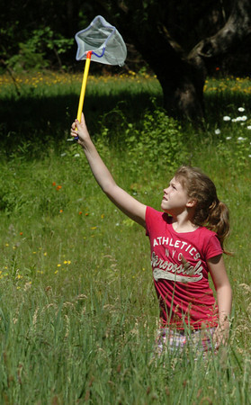 Amesbury: Sophia Haritas, 10, tries to catch butterflies or any other insect at Camp Kent in Amesbury on Tuesday morning. She and her fellow fifth-graders from Amesbury Middle School were on an environmental field trip studying creatures in the fields and Lake Gardner. Bryan Eaton/Staff Photo