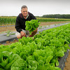 Newbury: Matt Kozazcki of Tendercrop Farm, in a field of lettuce, artichokes and garlic, has had a good start to the growing season and is expecting it to continure with blueberries and apples. Bryan Eaton/Staff Photo