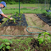 Rowley: Steve Harrison of Rowley does some weeding in his garden plot at Rowley's community garden. A landscape contractor he is involved in flower and shrub planting, but this is the first time he and his wife, Rosemarie, have attempted vegetables. Bryan Eaton/Staff Photo