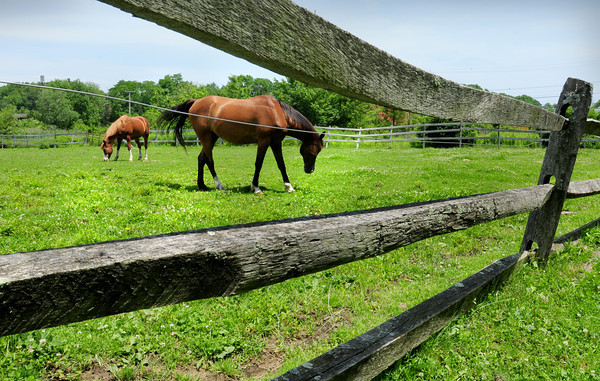 Amesbury: The recent rain and warm weather have created some lush grass for these horses to feed on at Pender Farm on South Hunt Road in Amesbury. Bryan Eaton/Staff Photo