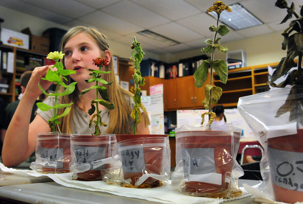 """Newbury: Jessie Dodge, 10, explains her project at the fourth grade science fair at Newbury Elementary School on Monday morning. She researched """"What Liquids Do Plants Grow Best"""" finding out that plain water is best and orange juice the worst. Bryan Eaton/Staff Photo"""