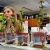 "Newbury: Jessie Dodge, 10, explains her project at the fourth grade science fair at Newbury Elementary School on Monday morning. She researched ""What Liquids Do Plants Grow Best"" finding out that plain water is best and orange juice the worst. Bryan Eaton/Staff Photo"