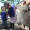 newburyport: Gabby Norris and Nate Speigel, both preschoolers at the Newburyport Montesorri school ,check out the sheep that Richard Rosenburg of Middle Earth Farm sheared on Inn Street in a demostration at the school.Jim Vaiknoras/Staff photo