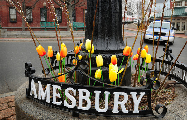 Amesbury: Real pussy willow branches and colorful fake tulips brighten up a gloomy sky Thursday morning in Amesbury's Market Square. The spring weather doesn't live up to normal temperatures until the middle of next week. Bryan Eaton/Staff Photo
