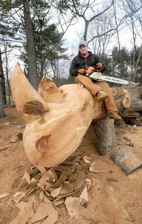Rowley: Jonathan Graham, a local woodcarver, wields his chainsaw to create a rhinoceros out of a large fallen oak tree at the property at 204 Dodge Road in Rowley. Jim Vaiknoras/Staff photo