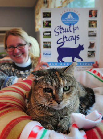 Salisbury: Stacy LeBaron of the Merrimack Valley Feline Rescue Society is ready for this weekend's Strut For Strays. Bryan Eaton/Staff Photo