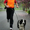 Newburyport: Bill McCarthy and his Australian Shepard, Babe, will be running the Key Bank Marathon in Vermont raising money for the Make-A-Wish Foundation. Bryan Eaton/Staff Photo