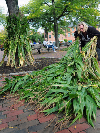 Newburyport: Ann Ormond, president of the Greater Newburyport Chamber of Commerce, and her staff decorated Market Square for the weekend's Fall Festival. Bryan Eaton/Staff Photo