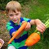 Seabrook: Aidan Felch, 7, shows one of his giant carrots, right, next to a regular store-bought one. The boy from Seabrook is a big fan of gardening. Bryan Eaton/Staff Photo