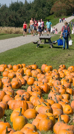 Amesbury: Apple pickers and pumpkin shoppers in shorts and shorts sleeves enjoy a Indian Summer day Saturday at Cider Hill Farm in Amesbury. Jim Vaiknoras/Staff photo