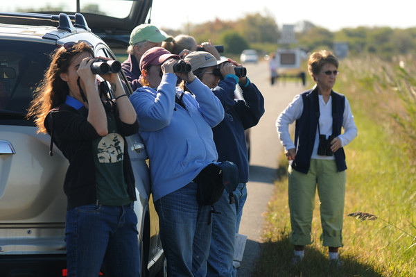 Newbury: A group from the Audobon Center in Newburyport searches for birds at the Plum Island Wildlife Refuse Saturday morning. Jim Vaiknoras/Staff photo