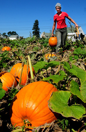 Salisbury: Jessica Sousy of Bartlett's Farm in Salisbury collects pumpkins for sale at the farmstand. Owner Donna Bartlett said other than being down with some small, ornamental gourds, the pumpkin crop is actually good this year. Bryan Eaton/Staff Photo