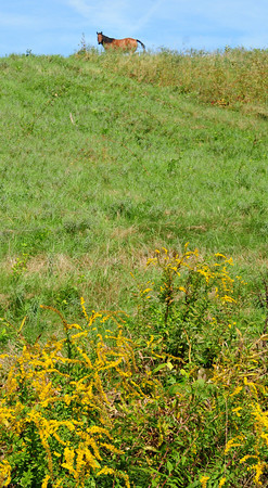 Salisbury: A horse looks down from his lush pasture on Congress Street in Salisbury on Wednesday afternoon. Bryan Eaton/Staff Photo