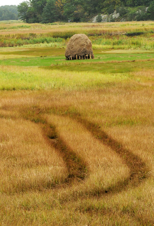 Newbury: Tractor tracks from a haying operation can be seen near these decorative haystacks on Route One in Newbury. Bryan Eaton/Staff Photo