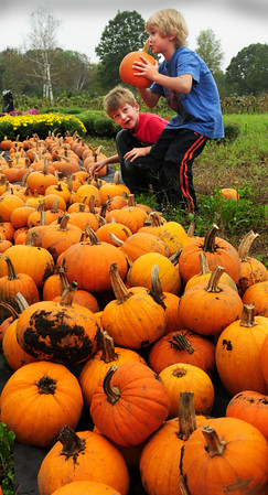 West Newbury: Kai Jimenez, 7, left, looks at his brother, Mateo, 5, as he finds a pumpkin to his liking. They and their mother, Julie, of West Newbury were choosing their gourds yesterday at Brown Spring Farm in that town. Bryan Eaton/Staff Photo