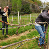 "South Hampton: Katie Henebry, left, and Sarah Breen check ties holding grapevines to guide wire and pick off any loose ""tendrils"" at Jewell Towne Vineyards in South Hampton. The winery is offering shares in its new ""community supported winery"" of which Henebry helped to organize and is facilitating. Bryan Eaton/Staff Photo"