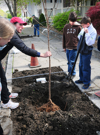 Newburyport: River Valley Charter School parent Bonnie Johnson shows students how deep to plant a Carolina Silverbell on Bromfield Street in Newburyport. They were one of several teams planting 40 trees around the city for Arbor Day with help from the Newburyport Tree Committee and Newburyport Department of Public Services. Bryan Eaton/Staff Photo