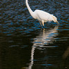 Newbury: An egret hunts for food in a small pond off Middle Road in Newbury Saturday afternoon. Jim Vaiknoras/staff photo
