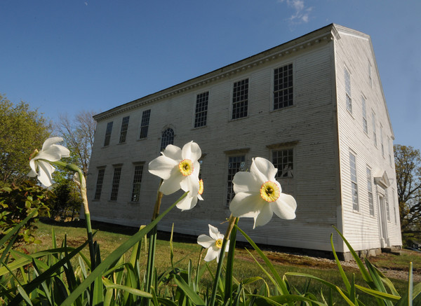 Amesbury: Daffodils just starting to loose their flowers behind the Rocky Hill Meeting House in Amesbury. Jim Vaiknoras/staff photo
