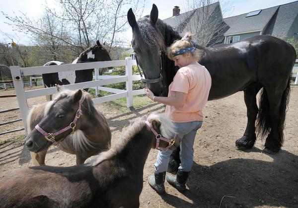 West Newbury: Cynthia Foote and her horses in West Newbury. Jim Vaiknoras/staff photo