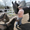 West Newbury: Cynthia Foote and her horses in West Newbury. Jim Vaiknoras/staff photo