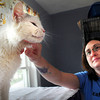 Salisbury: Liz Pease from the Merrimack Valley Feline Rescue Society gives some attention to an adult cat, Zureh. The society has no problem placing kittens, which are more in demand, so have many adults they'd like to hook up with new owners. Bryan Eaton/Staff Photo