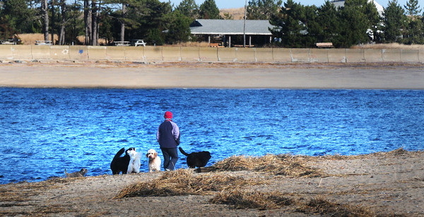 Newburyport: A women takes her canine charges for a walk on Plum Island Point on Wednesday morning. Though the temperature was warm for December, the wind cooled things down. Bryan Eaton/Staff Photo