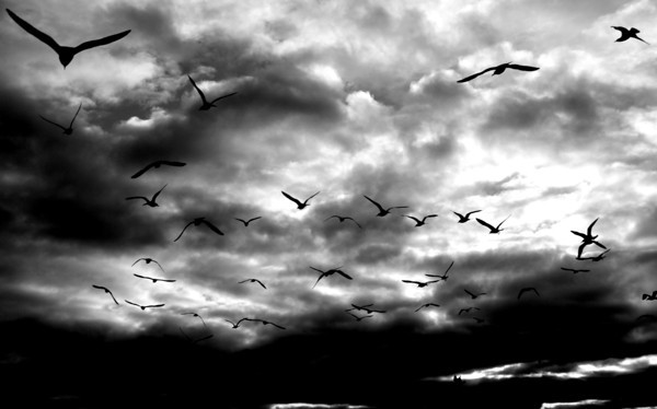 Salisbury: A flock of seagull fly off under treatening skies over Salisbury Beach Saturday afternoon. Jim Vaiknoras/staff photo