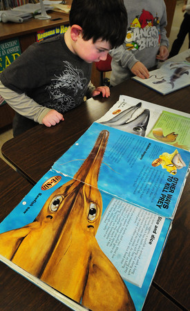"Amesbury: Declan Harding, 7, looks at a book he checking out from the Amesbury Elementary School library ""Sharks and Other Underwater Creatures"" on Wednesday. The children go to the library once a week where they get a story read to them, then they pick out a book or two to take home until the next visit. Bryan Eaton/Staff Photo"