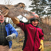 Sam Aponas, 13, of Byfield ducks as he releases a flapping great horned owl back to the wild yesterday afternoon as his father, Sam, right, takes photos. His neighbor, former Triton teacher and biologist Dave Taylor, left, was brought the owl, which was injured on Interstate 95 and rehabilitated. Bryan Eaton/Staff Photo