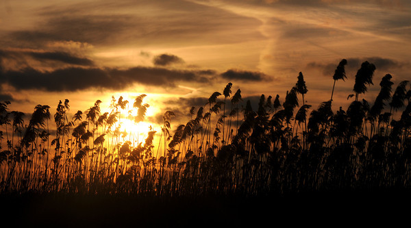 Salisbury: Tall Grass along Bridge Road in Salisbury is backlite by the first sunset of the New Year. jim vaiknoras/ staff photo