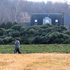 Newbury: A women walks by a large pile of Christmas Trees at the Spencer Pierce Little Farm in Newbury. The tree will be fuel for a bon fire next Saturday night. Jim Vaiknoras/staff photo