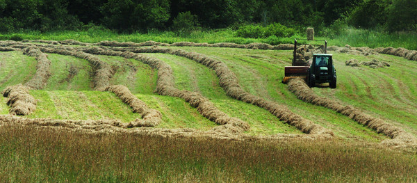 Salisbury: A hay baler pops one into a trailer in this field off Congress Street in Salisbury on Monday before any chance of showers could dampen the crop. Bryan Eaton/Staff Photo