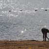 Amesbury: People enjoy a late afternoon visit to Lake Gardner in Amesbury Thursday. Jim Vaiknoras/staff photo