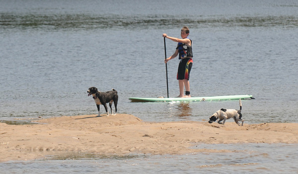 Amesbury: Two dogs explore a sandbar at low tide off Deer Island as a stand up paddle boarder glides by Sunday morning. JIm Vaiknoras/staff photo