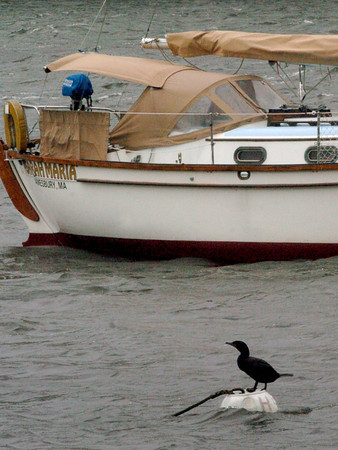 Amesbury: Yesterday's weather was not especially nice for boaters, but was ideal for this cormorant perched on a buoy at Hatter's Point in Amesbury. Bryan Eaton/Staff Photo