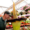 Georgetown :Stephen Flynn take a sniff of the corpse flower at Nunan's Florest and Green House.when in bloom the flower smells like rotting vegitation. Jim Vaiknoras/staff photo