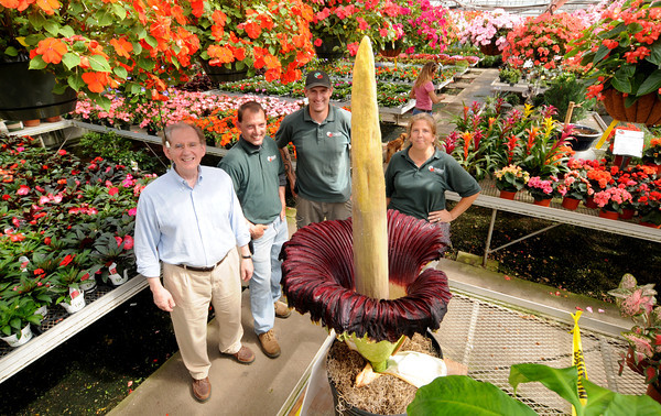Georgetown : Frank Coppolino, poses with Nunan employees Micheal Nickerson, Stephen Flynn, Maureen Nickerson and the corpse flower at Nunan's Florest and Green House. Jim Vaiknoras/staff photo