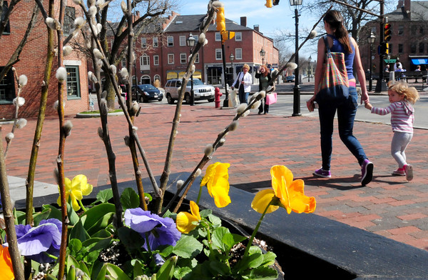 Newburyport: Pansies and pussy willows decorate a flower box in Market Square yesterday in Newburyport a fitting reminder of spring which starts today. Unusually warm weather is expected throughout the week. Bryan Eaton/Staff Photo