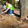 Newburyport: Crews from Newburyport's Department of Public Services have been rearranging brick sidewalks to give trees along High Street more room to grow. Justin Craig cuts pieces of brick to fit around this tree near Federal Street. Bryan Eaton/Staff Photo
