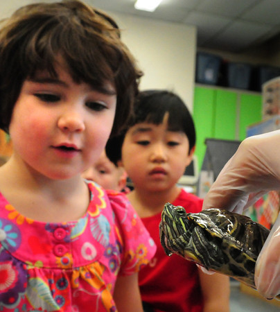 Newburyport: Quinn Morrisey, 3, left, and Lauren Pang, 4, check out a red-eared slider turtle at the Brown School on Friday. The turtle was on loan from the Bresnahan School and the youngsters have been learning about turtle habitat. Bryan Eaton/Staff Photo