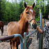 "Seabrook: Coreen Perkins and her husband, Wayne, have several horses, ""Chester"" pictured, and other livestock at the Seabrook home and a large garden. They use town water and sewer, but sewer costs are based on water usage and the majority of the water they used goes to the animals and garden and not into the sewer system. Bryan Eaton/Staff Photo"