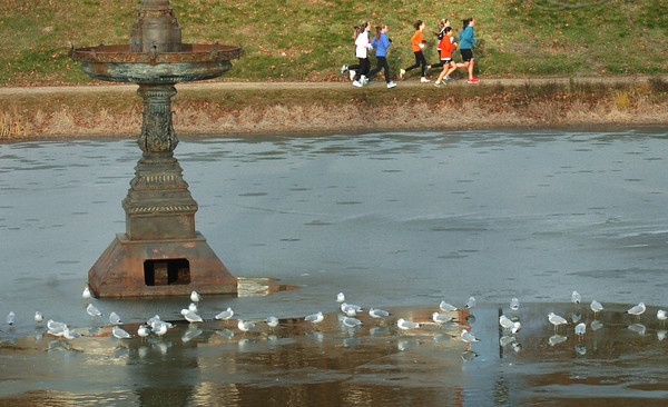 Newburyport: Seagulls rest on a thin sheet of ice on the Frog Pond at the Bartlet Mall as members of the Newburyport High indoor track team run around the pond on Wednesday afternoon. Bryan Eaton/Staff Photo